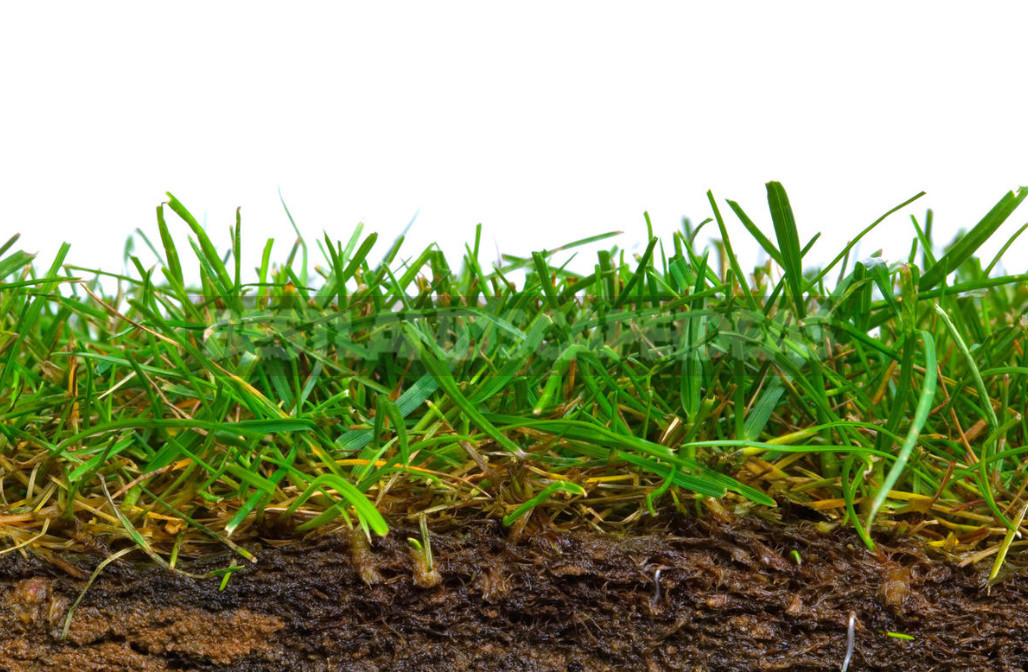 Five mistakes in the care of the lawn which can irretrievably spoil it 8 - Five Mistakes In the Care of the Lawn, Which Can Irretrievably Spoil It
