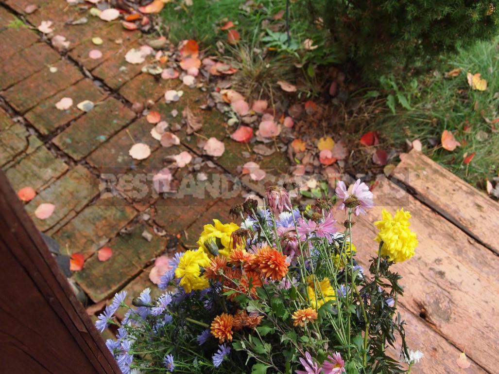 Goods for autumn walks 2 - Goods for Autumn Walks