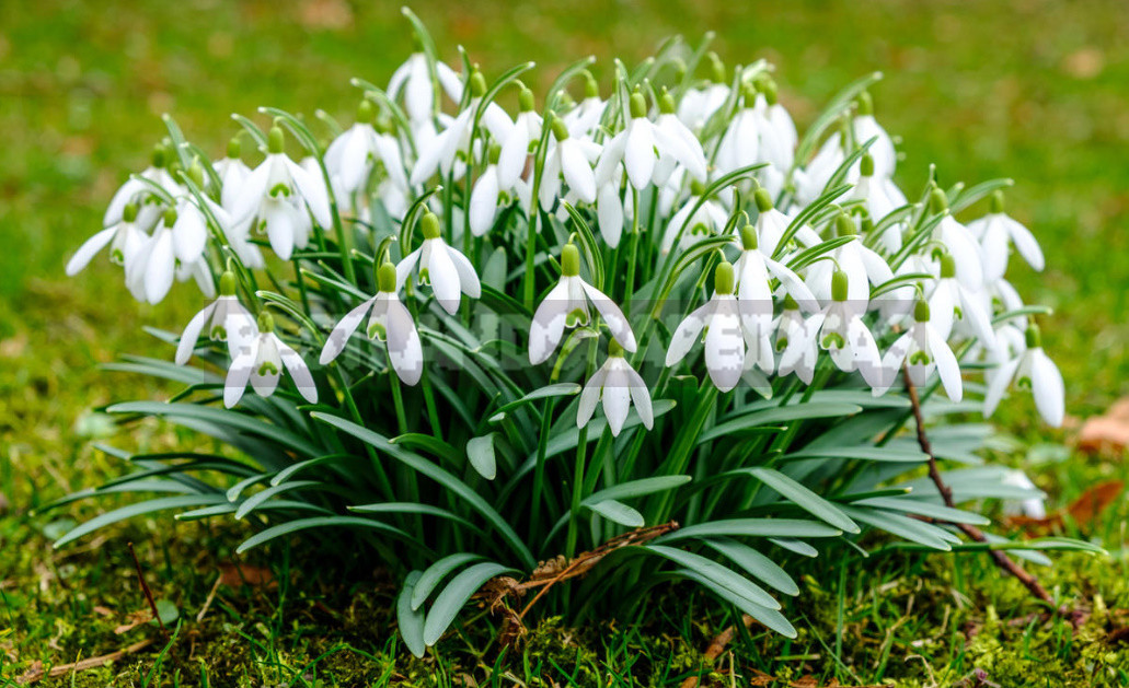 Terms of Planting Bulbous And Tuberous Flowers