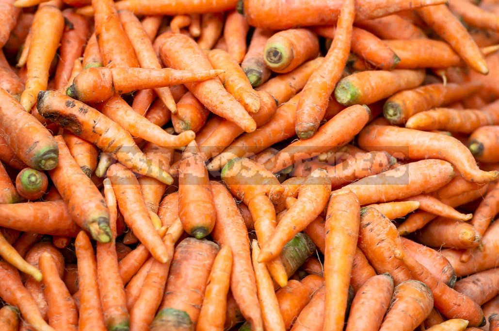 Mistakes in Harvesting And Storing Carrots