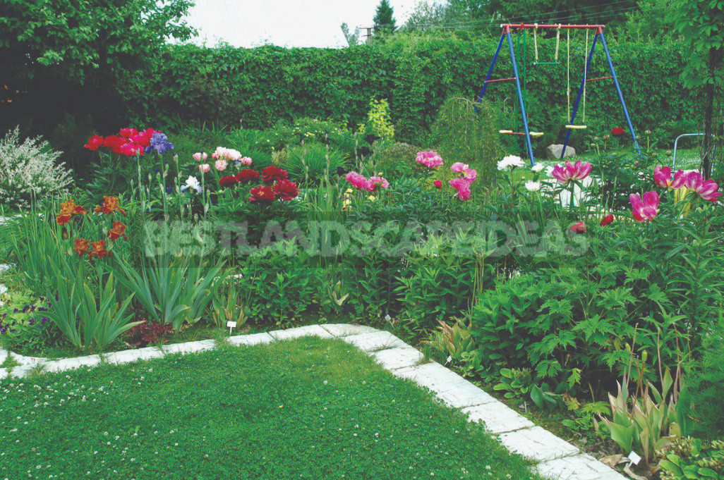 Peonies in Landscape Design (Part 2)