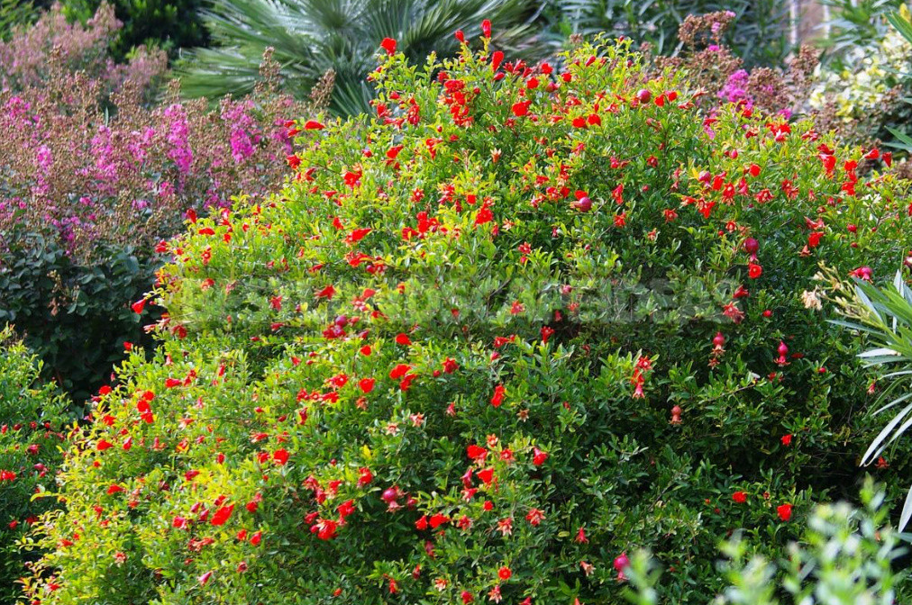 Plants That Need to Be Cut in the Fall