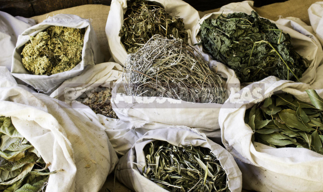 What Herbs do Brewers Use to Give the Drink a Special Taste