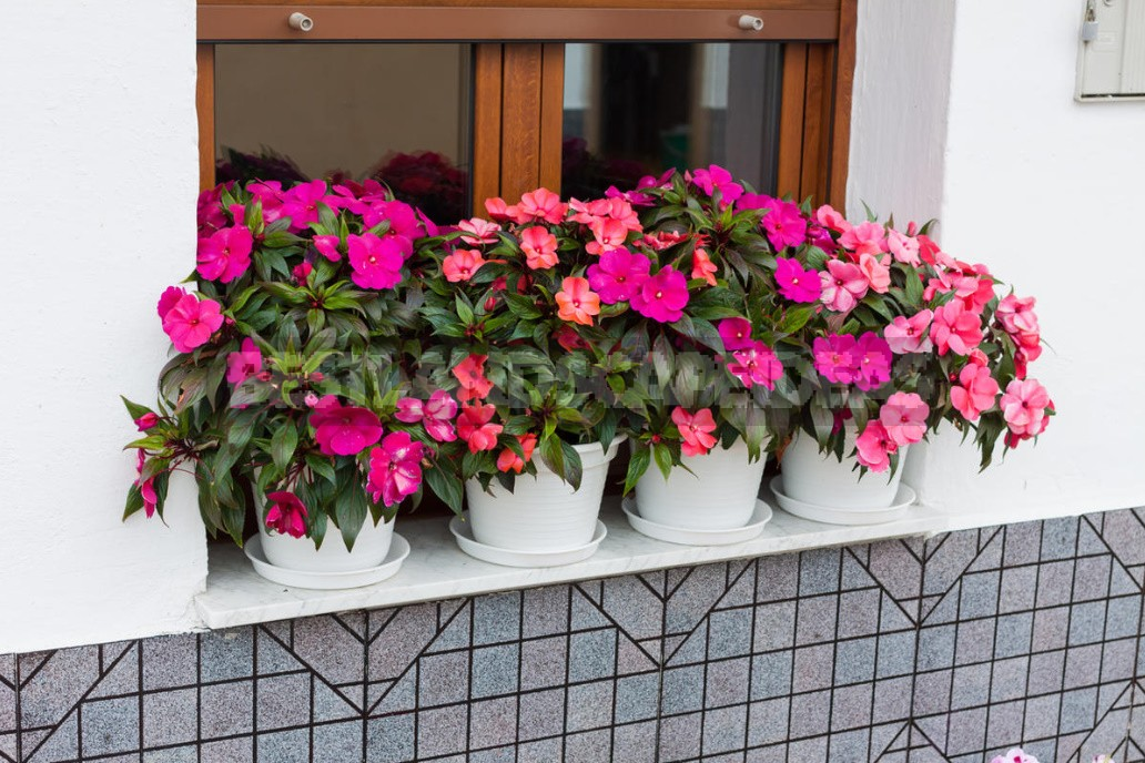 Houseplants For Happiness And Good Luck