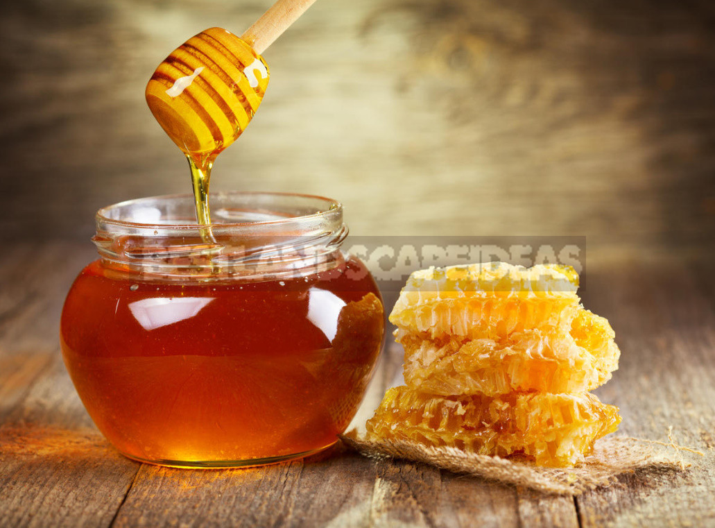 How to Choose the Right Honey. Signs of Forgery 1 - How to Choose the Right Honey. Signs of Forgery.