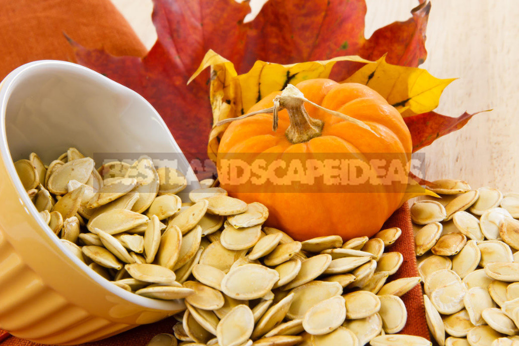 How to prepare pumpkin seeds for food and planting 1 - How to Prepare Pumpkin Seeds For Food And Planting