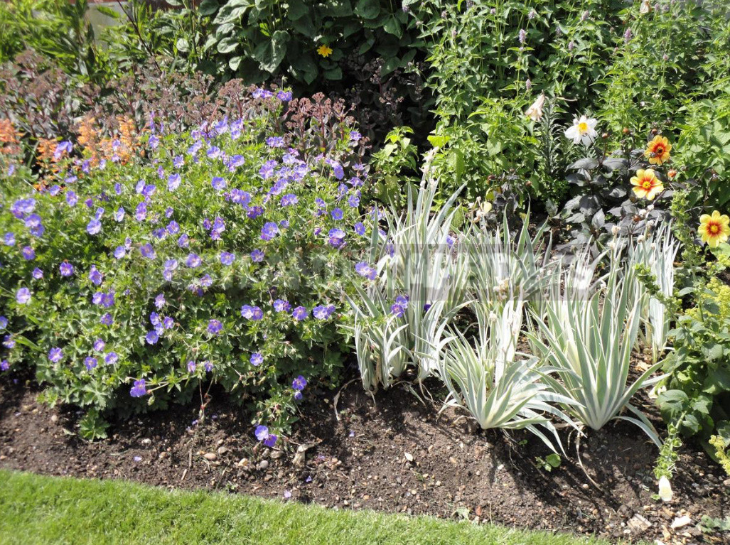 Mulching in the Garden: Reasons, Materials, Timing