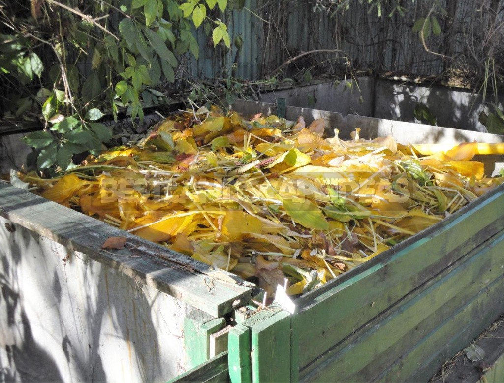 Perfect Compost Box: Location, Material, Dimensions, Usage (Part 2)