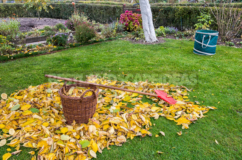 Plant residues that pose a danger to the garden 1 - Plant Residues That Pose a Danger To the Garden
