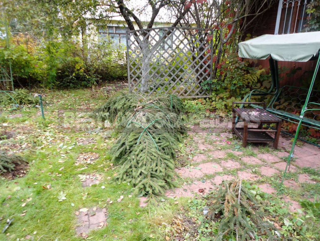 Three ways to shelter roses for the winter honestly about the advantages and disadvantages of each 7 - Three Ways to Shelter Roses For the Winter: Honestly About the Advantages And Disadvantages of Each