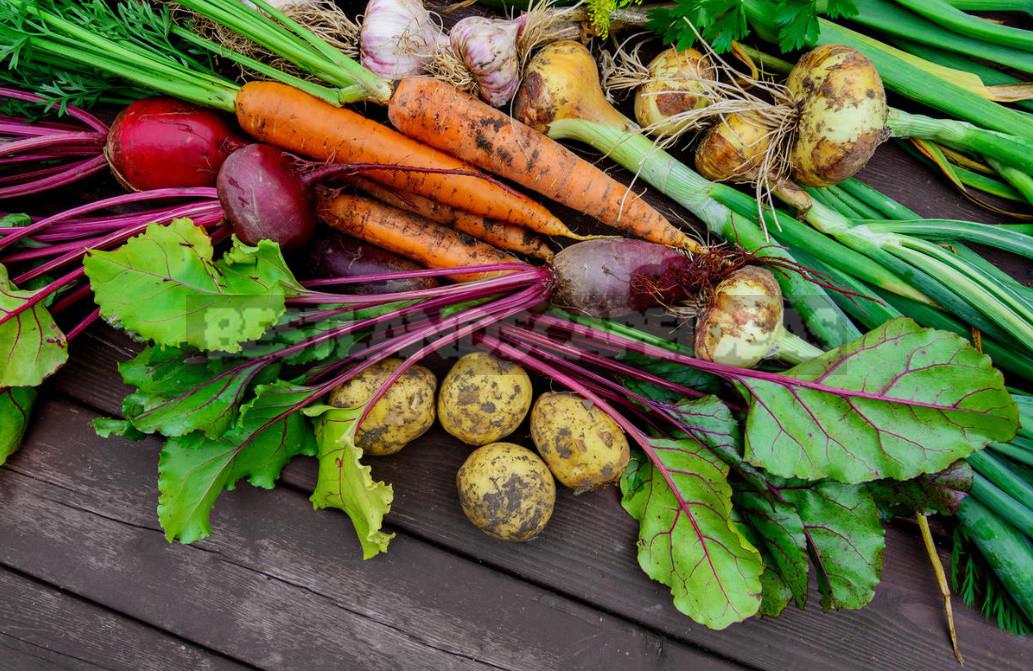 Tips for storing vegetables 1 - Tips For Storing Vegetables (Part 1)