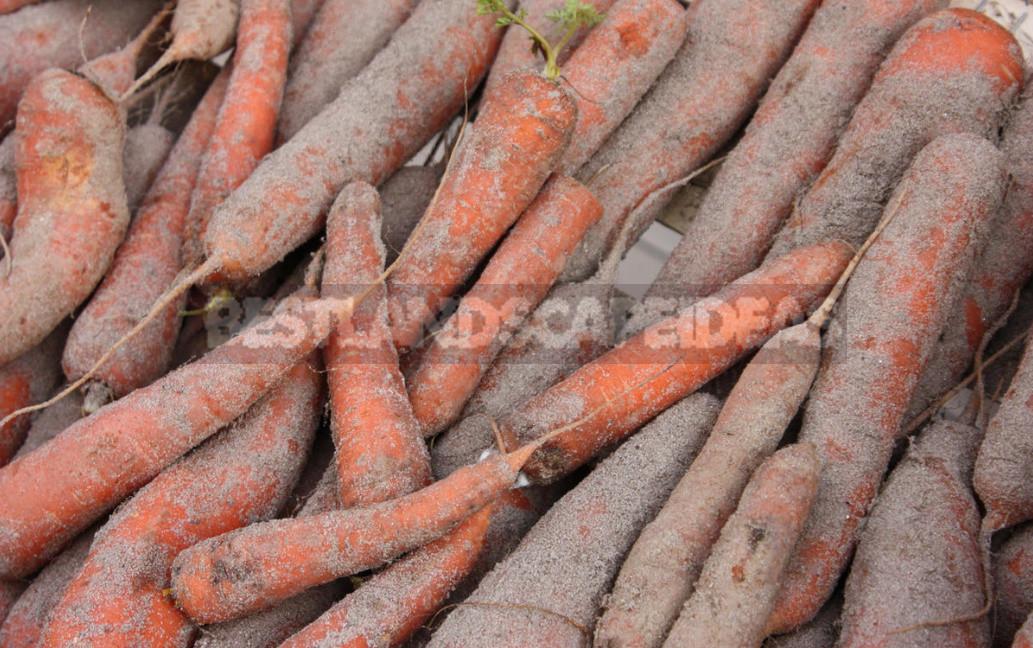 Tips For Storing Vegetables (Part 1)