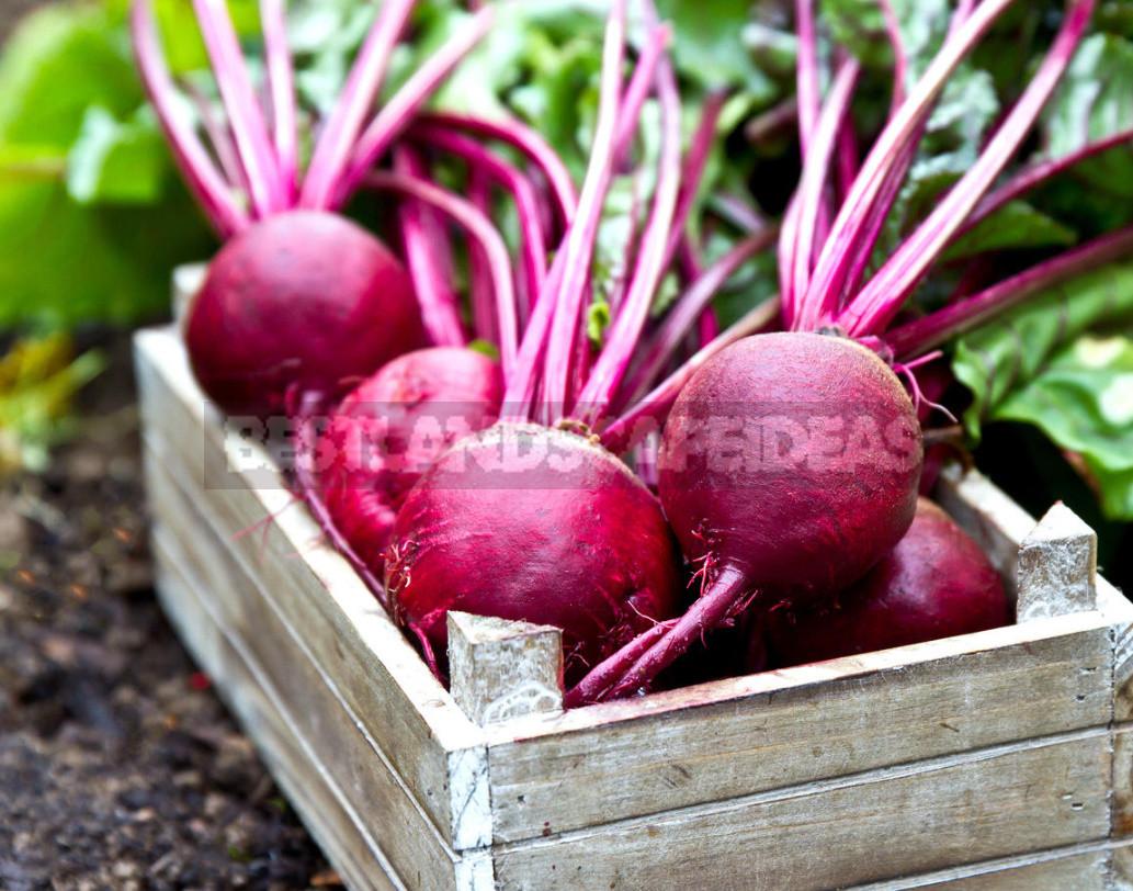 Tips For Storing Vegetables (Part 2)