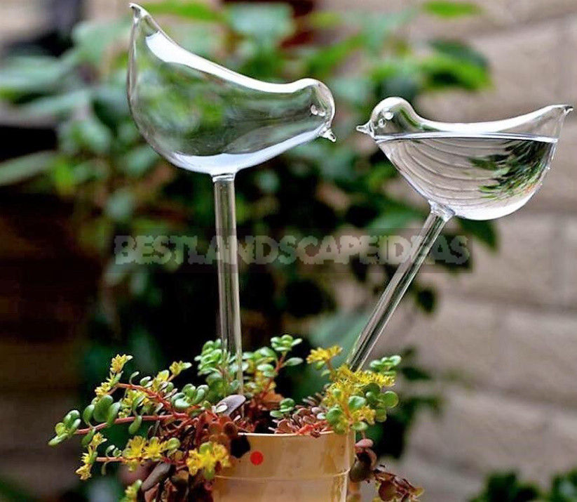 Useful Finds For Gardeners: Online Shopping, as Always, Pleasantly Surprised