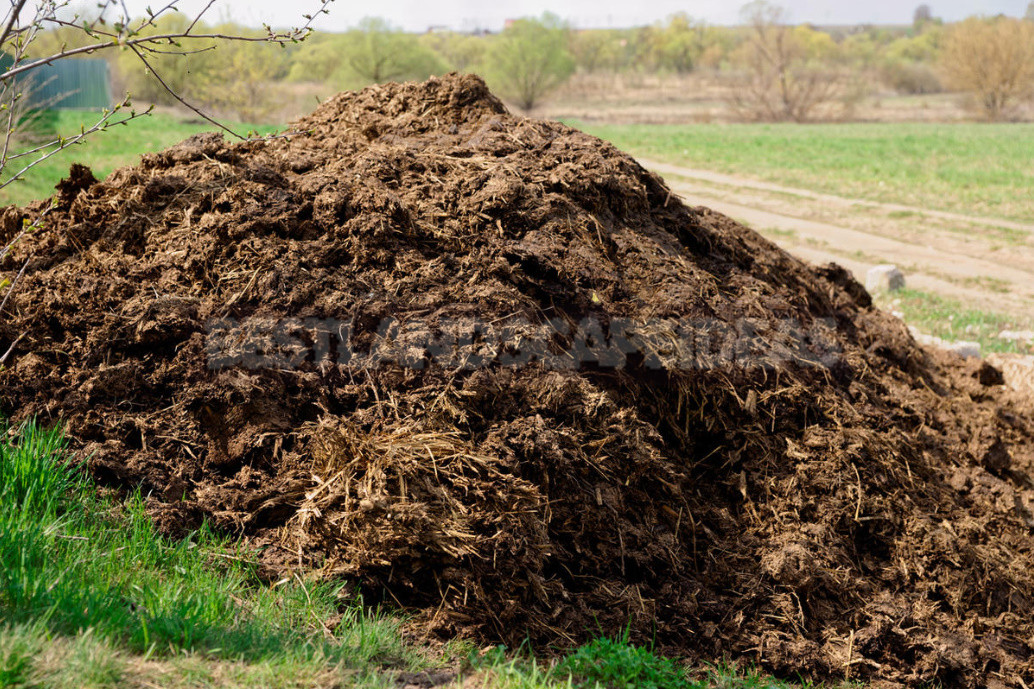 What Is Dangerous Manure?