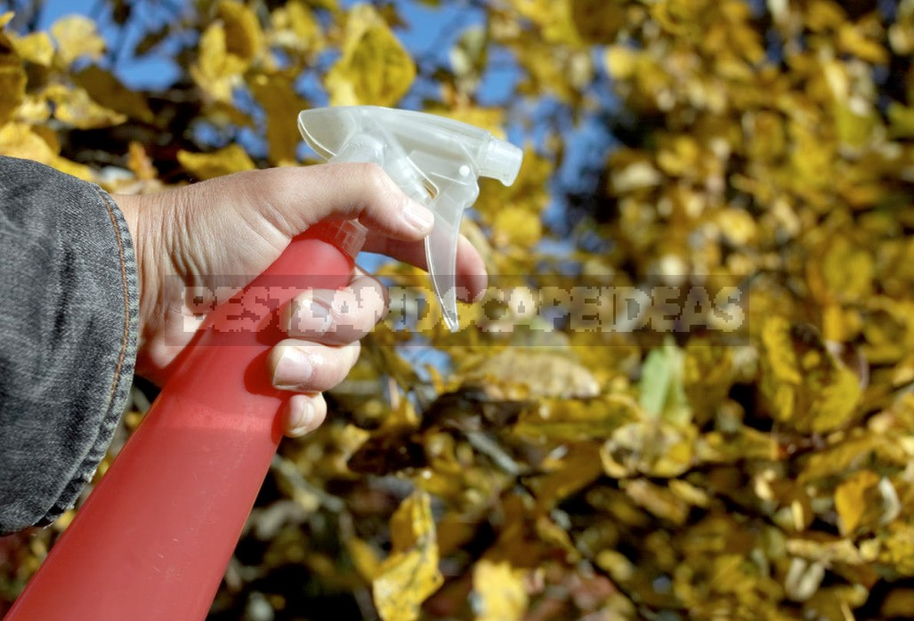 Autumn Treatment Of Trees And Shrubs: Main Issues