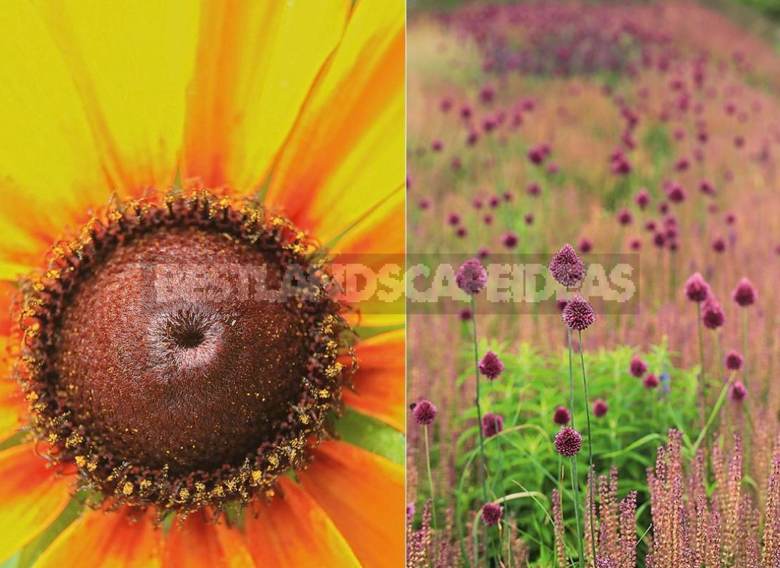 Lessons From the Garden Photos
