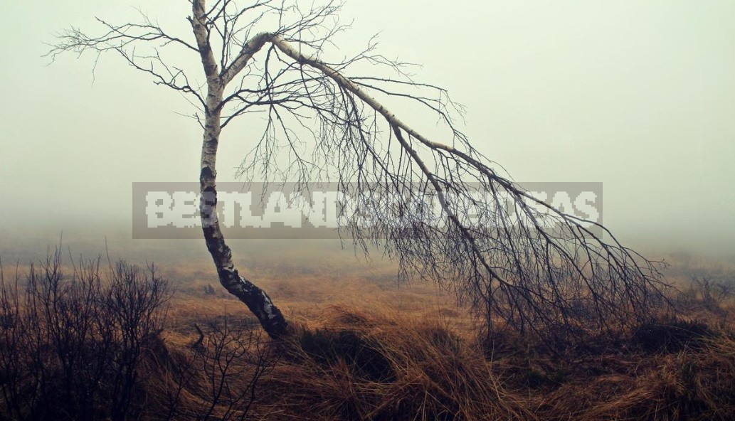 Types of Swamps, Pros And Cons of Wetlands (Part 2)