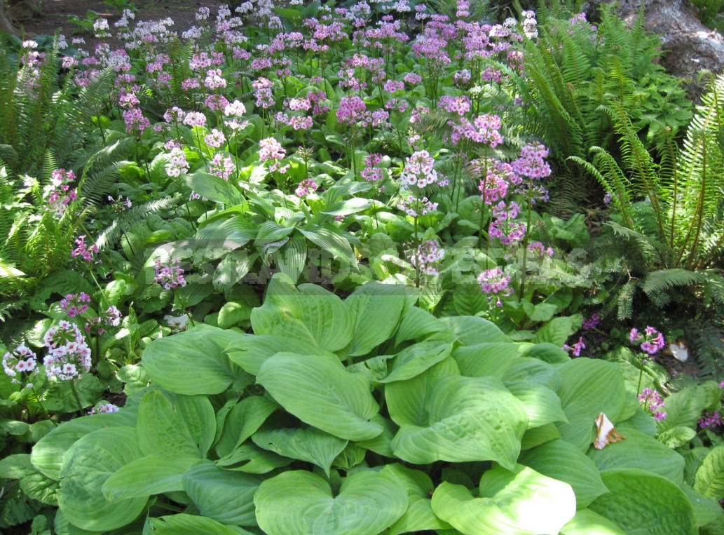 What To Plant In The Shade Plants For Flower Beds Best