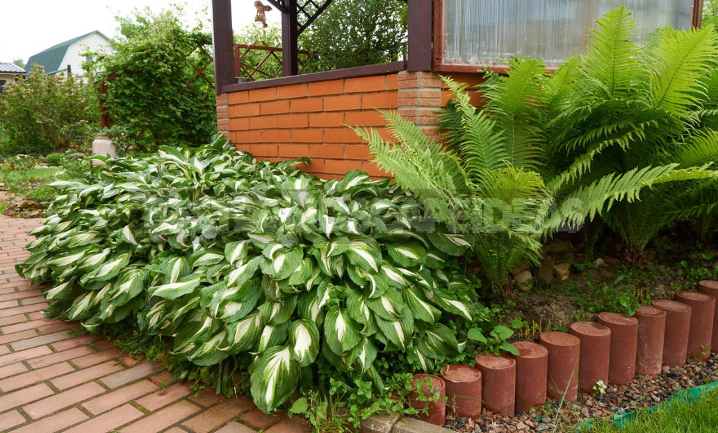 What To Plant In the Shade: Plants For Flower Beds