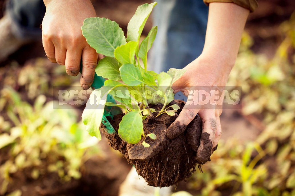 Garden And Vegetable Garden for the Lazy: How To Facilitate Work In the Country (Part 1)