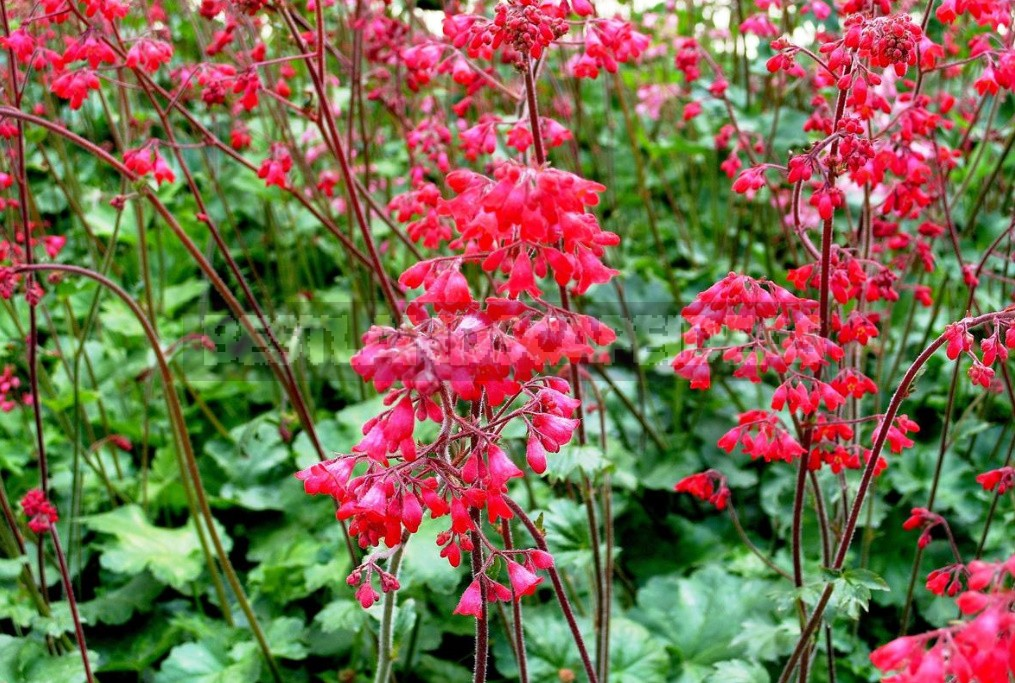 The Perfect Trio the Best Perennials For Your Dachas