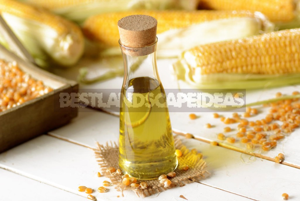 Vegetable And Animal Oils: What Is Best For Cooking (Part 3)
