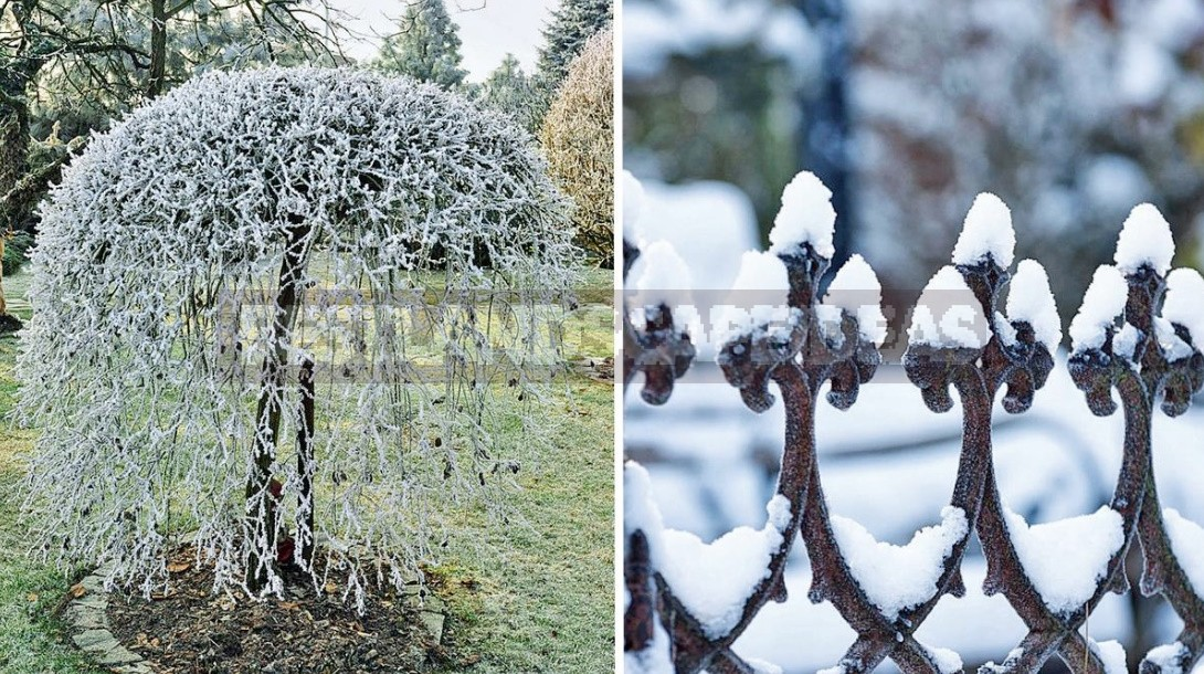 Garden Design In Winter: Techniques And Accents Of Landscape Design