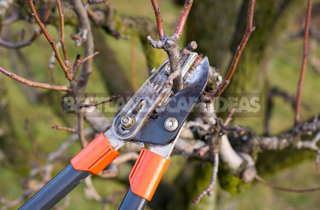 How To Prolong The Life Of An Old Fruit Tree