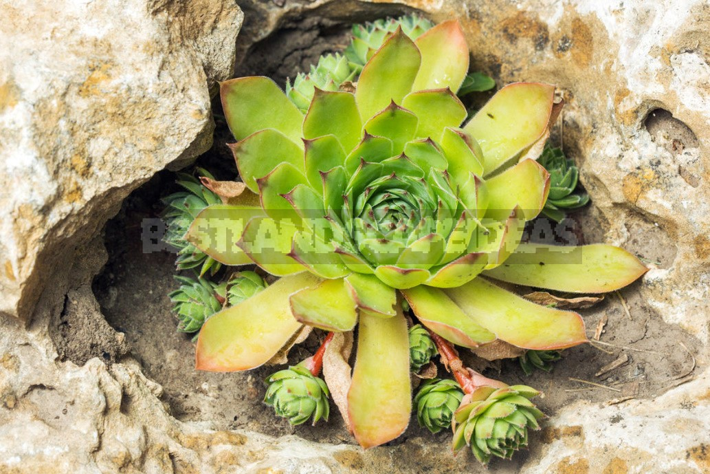Stylish Rockery: What Plants To Plant