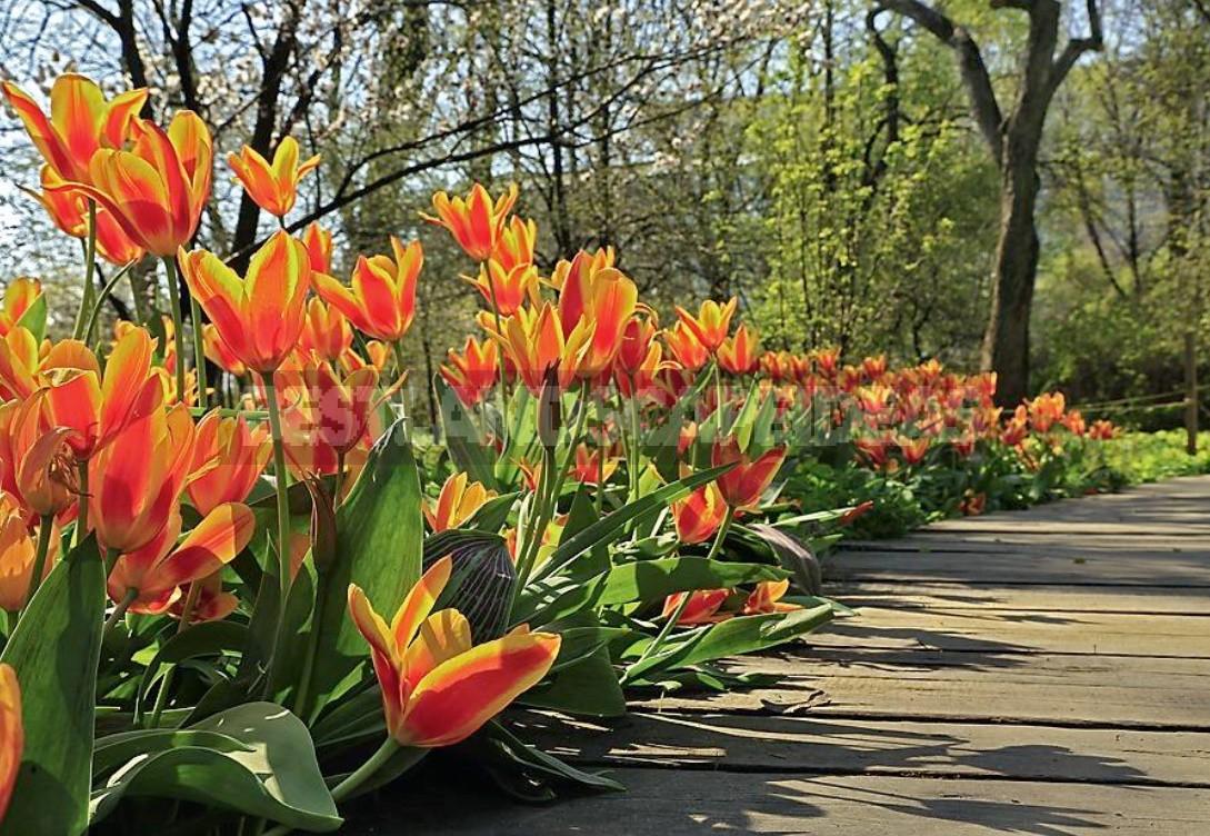 Taking a Garden Landscape: Secrets Of Successful Photos