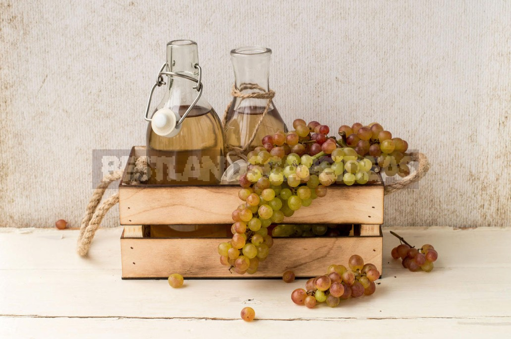 What Are The Benefits Of Grapes, Their Seeds And Leaves (Part 1)
