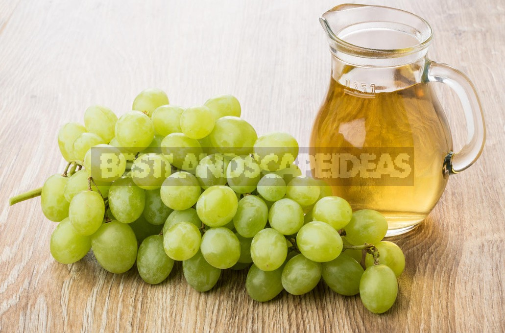 What Are The Benefits Of Grapes, Their Seeds And Leaves (Part 2)