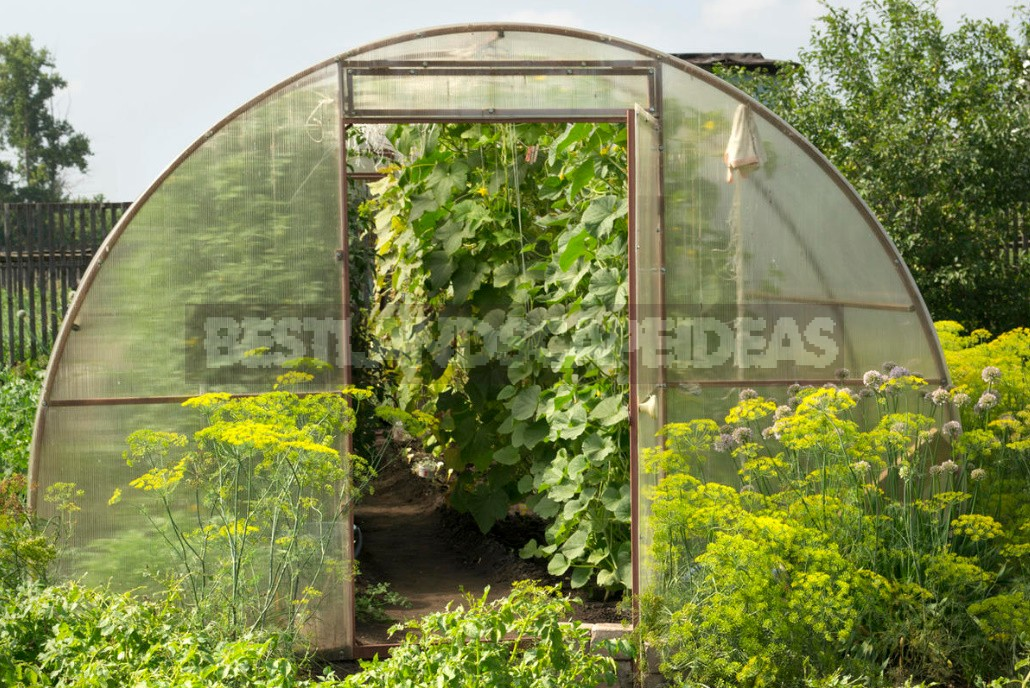 Automatic Ventilation Of Greenhouses. What Are The Options?