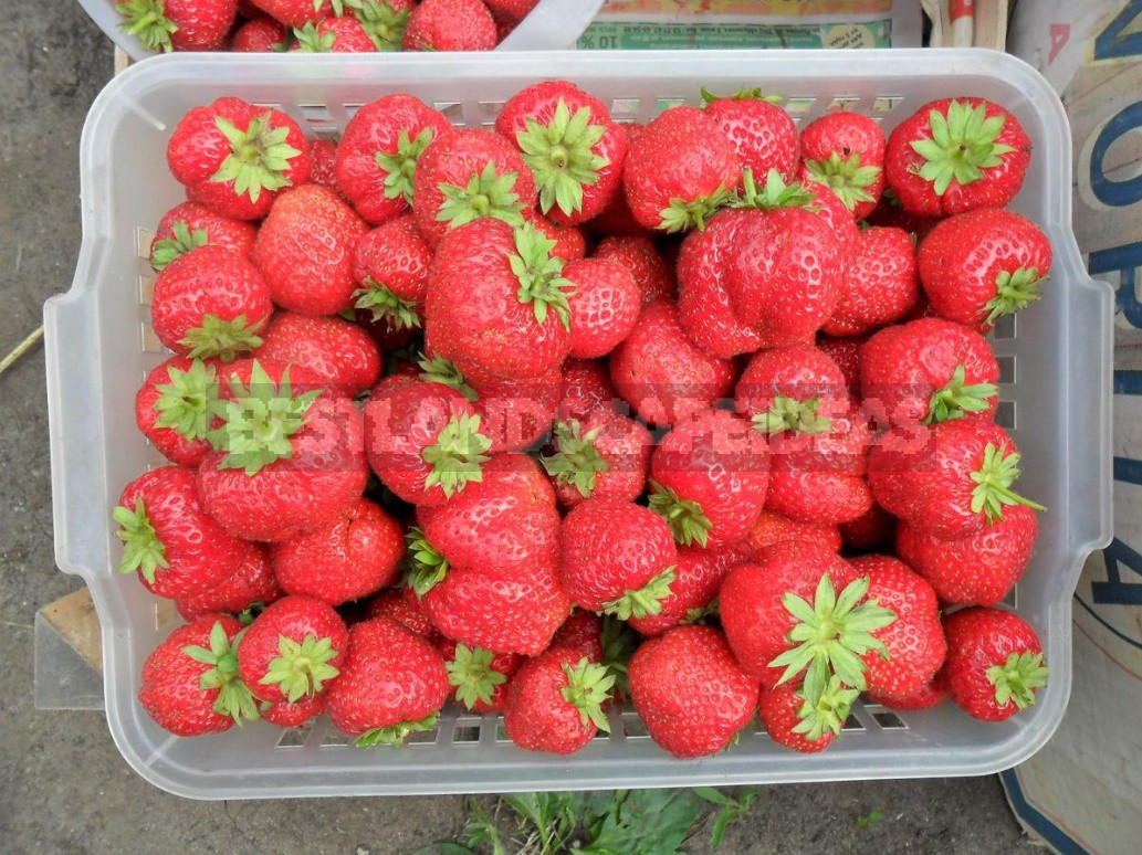 Five Simple Rules For Growing Strawberries