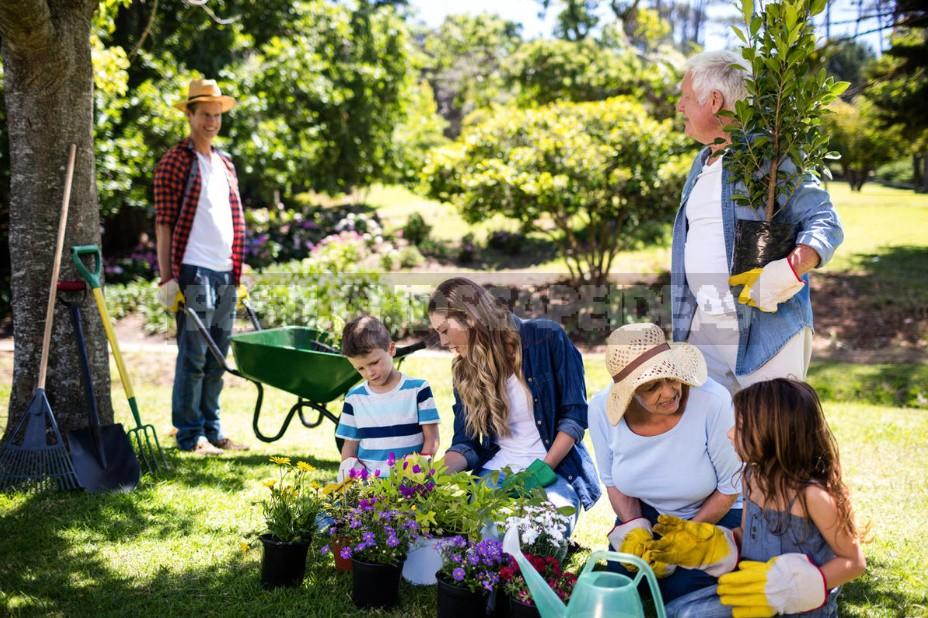 Gardening As An Incurable Disease