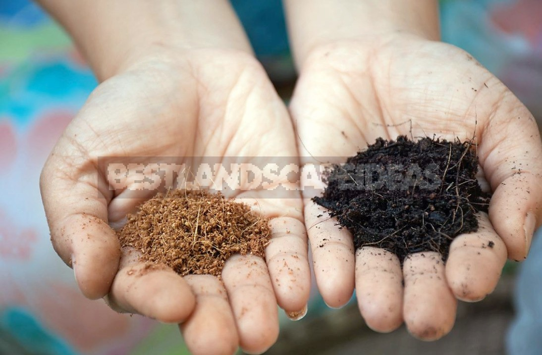 Home Farming: Selection And Preparation Of Soil For Sowing And Planting