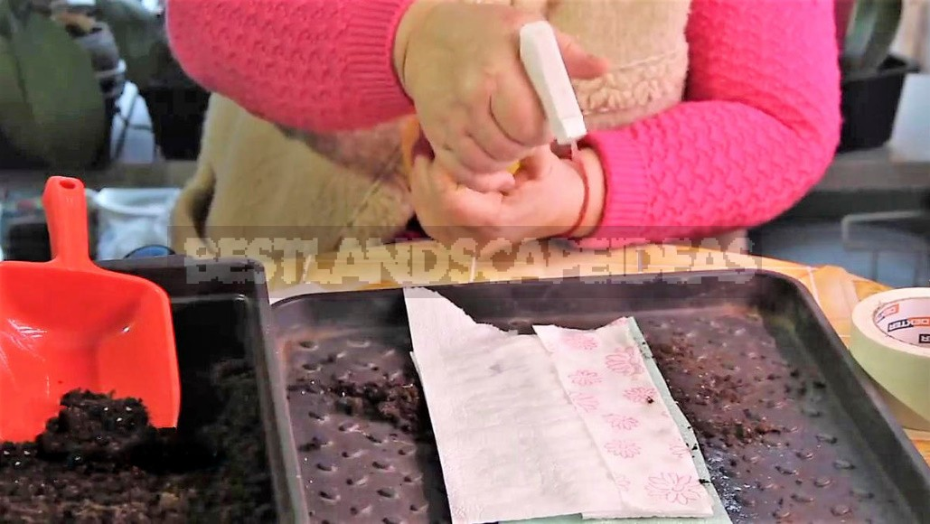 Seeding In Snails: We Understand In Detail The Most Compact Method Of Growing Seedlings