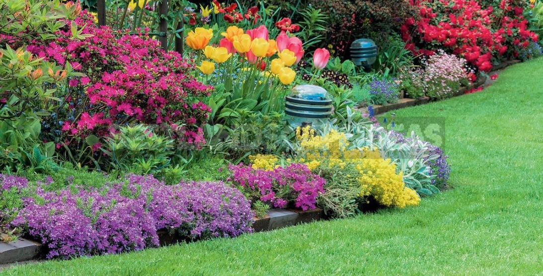 Annual Flowers In The Garden: Where And How To Plant