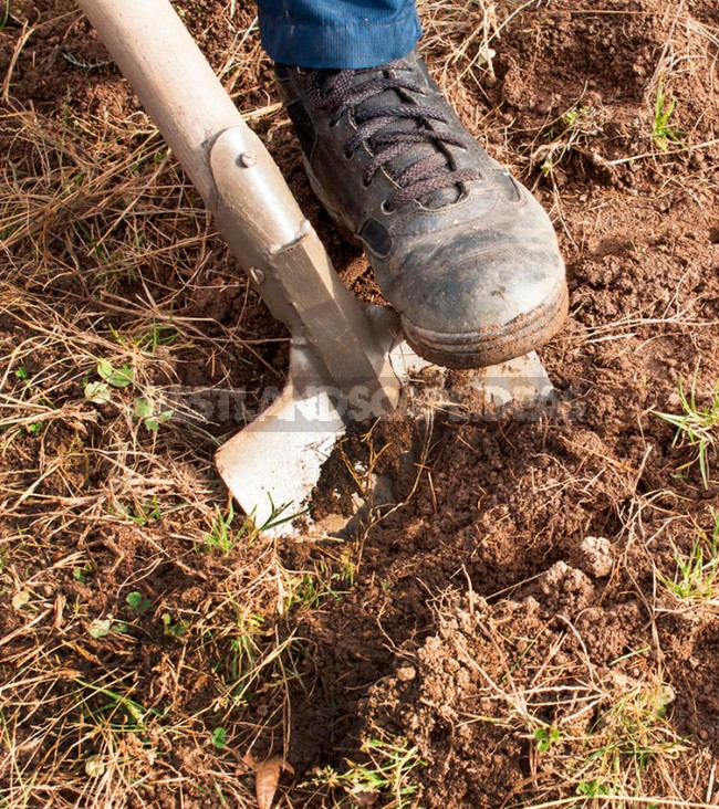 Bad Land Is Not a Hindrance. How To Get a High Yield On Different Types Of Soil