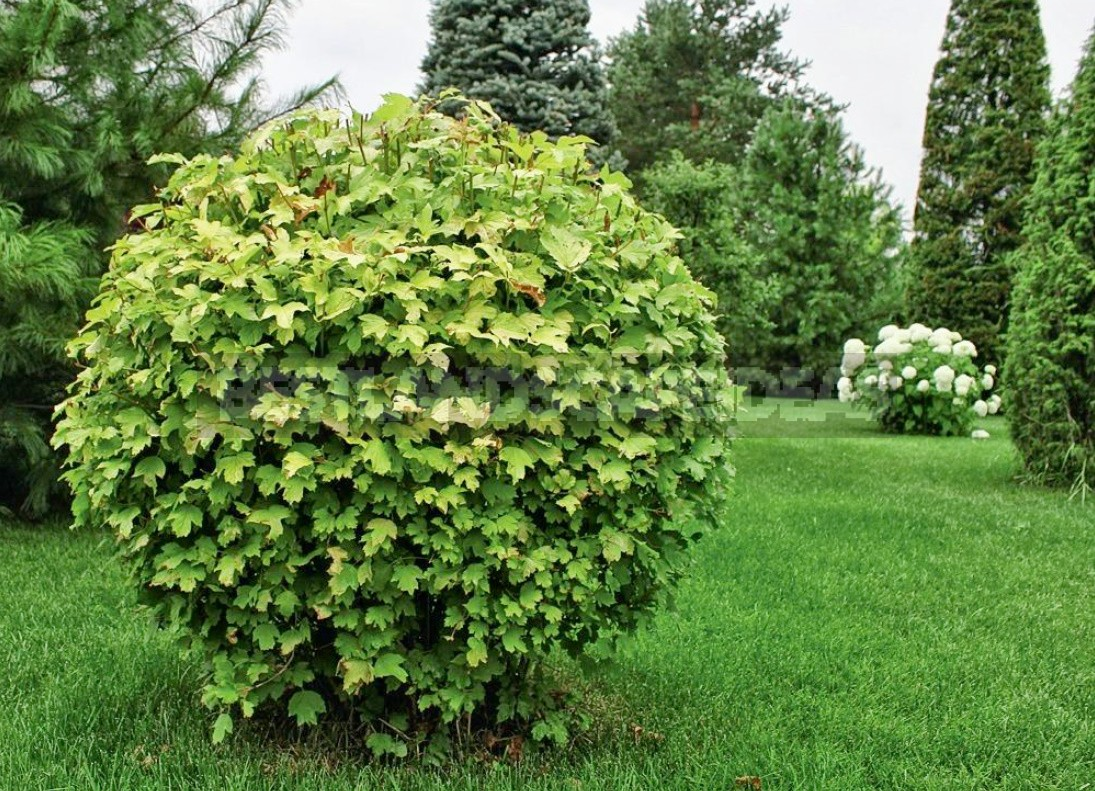 How To Properly Cut And Trim Plants: Tips For Beginners