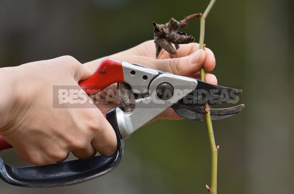 Pruning Toses: Terms, Types, Basic Techniques