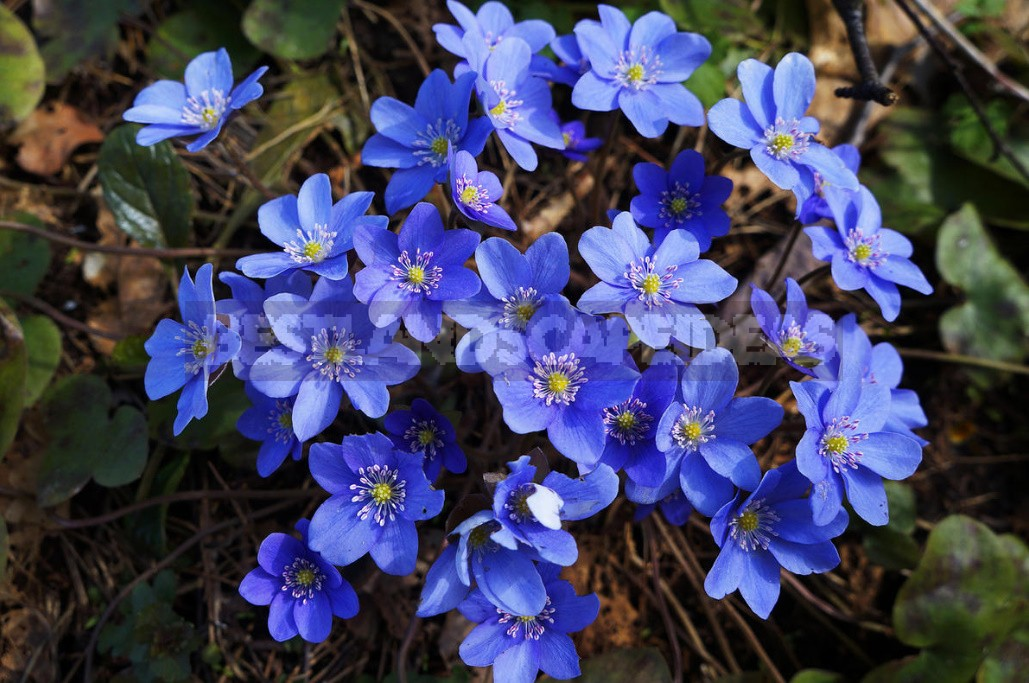 The most beautiful and pretty plants. Enjoy, but don't tear!