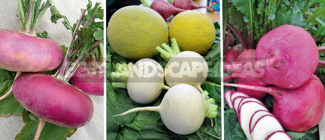 Turnip Varieties: Choose The Taste And Color