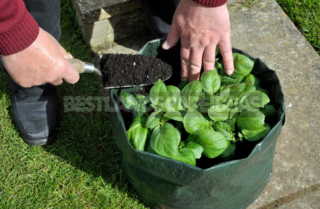 Vegetable Garden In Containers: Growing Vegetables In Old Buckets And Basins (Part 1)