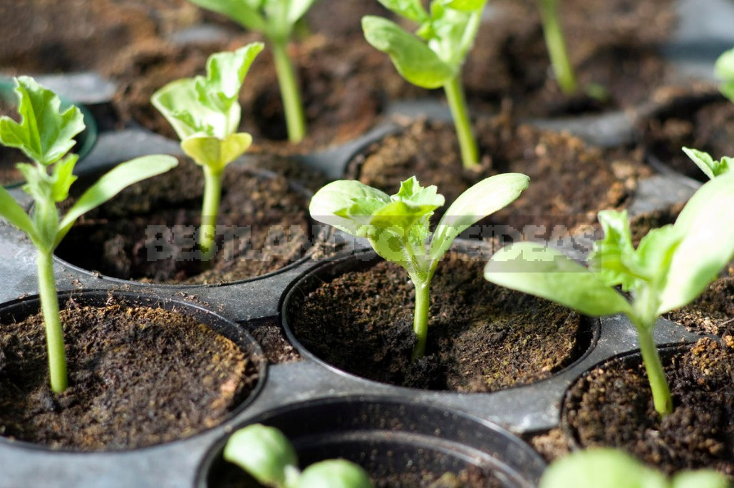 What Should Be The Ideal Soil For Seedlings