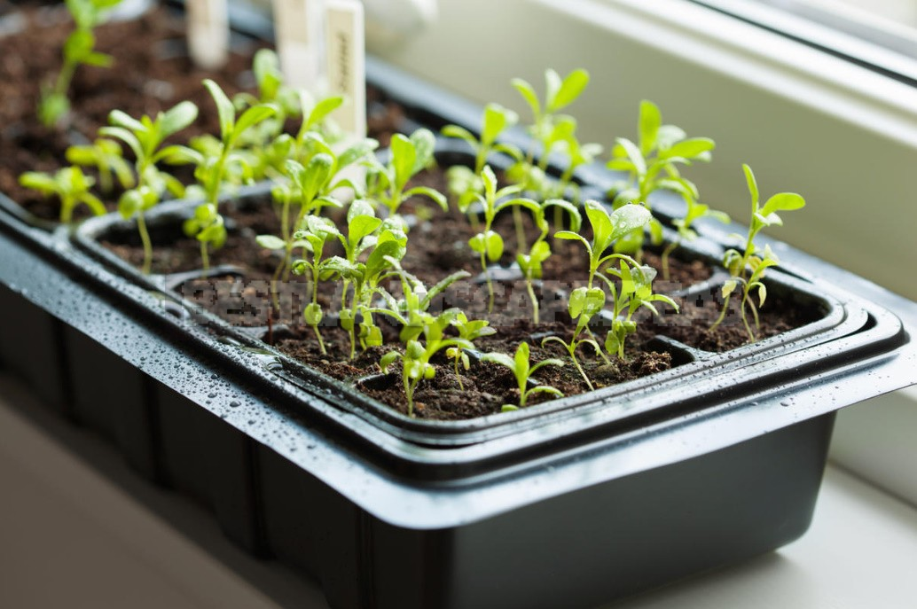 What You Need And Do Not Need To Do When Feeding Seedlings