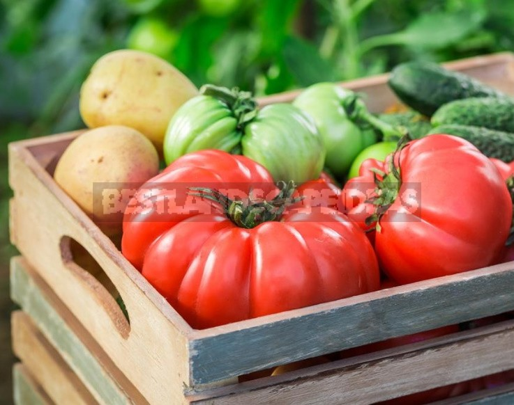 What You Need To Know About Feeding Tomatoes From Sowing To Harvesting