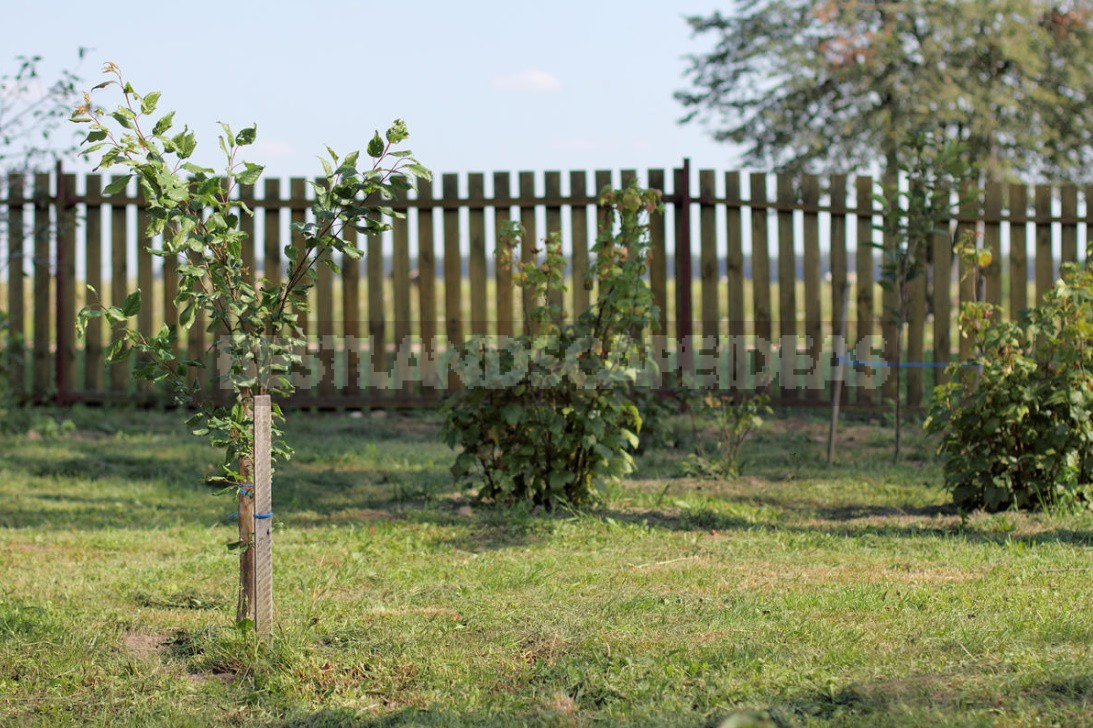 Detailed Instructions On How To Bookmark An Orchard. How To Plant Trees Without Errors (Part 1)