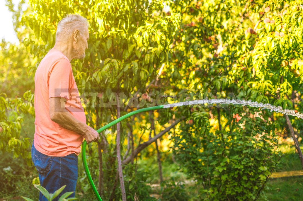 How To Plant And How To Fertilize Fruit Trees